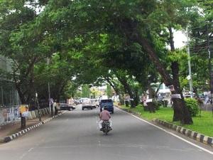 jalan dan pohon kota