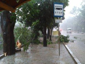 pohon-tumbang-jaktim-2016-halte