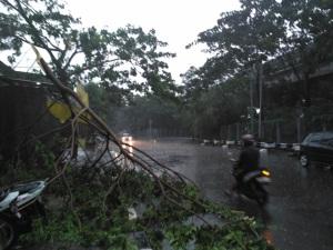 pohon-tumbang-jaktim-2016b